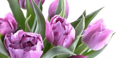 С праздником весны поздравляем….